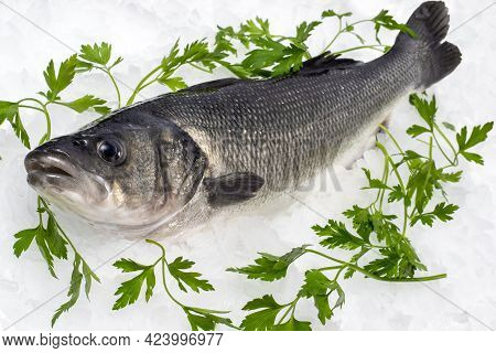 Close Up Of Fresh Sea Bass On Ice With Decorative Green Parsley Leaves.