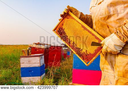 Beekeeper Is Holding Closed Honeycomb Full With Honey On Wooden Frame.