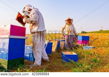 Beekeepers Are Taking Out The Honeycomb On Wooden Frame To Extract Honey From Bee Hives, Harvest.
