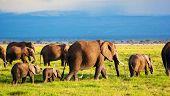 Elephants family and herd on African savanna. Safari in Amboseli, Kenya, Africa poster
