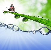 grass with dew drops and butterfly above the water level poster