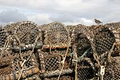 seagull standing on stack of lobster pots poster
