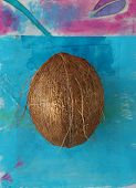 whole coconut photographed on a painted tropical blue background. poster
