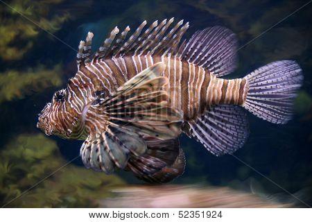 Scorpion Fish Underwater Close Up