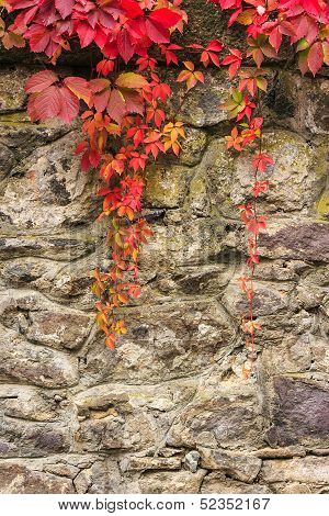 Plant With Red Leaves On Stone Wall