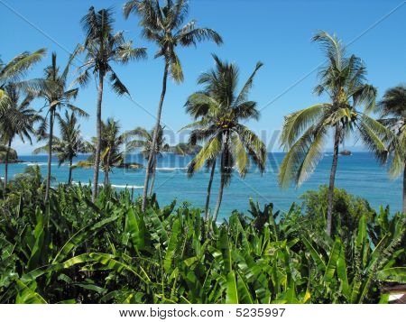 Coconut Palms and Banana Leaves