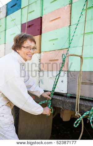 Happy female beekeeper tying rope to stacked honeycomb crates loaded on truck poster