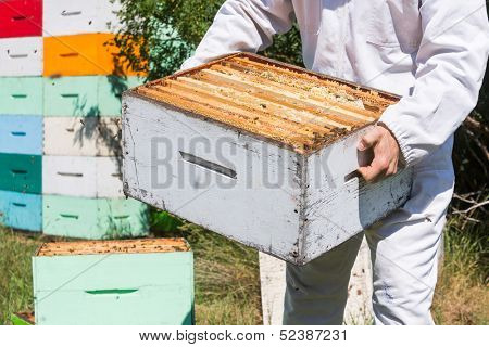 Midsection of beekeeper in protective workwear carrying honeycomb box at apiary poster