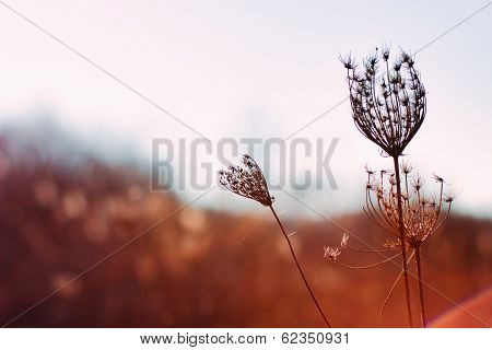 Plant of the field in a meadow in the morning
