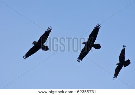 Three Black Ravens Flying in a Blue Sky poster