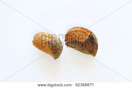 Shelled Almonds