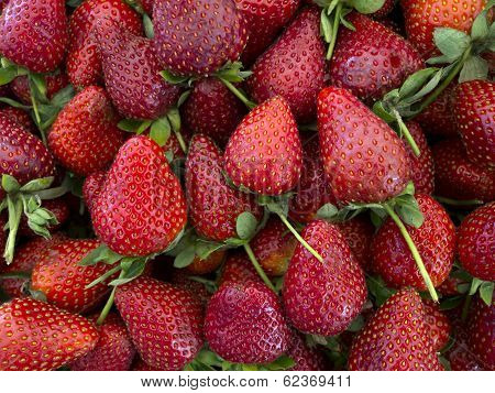 Fresh Organic Strawberries