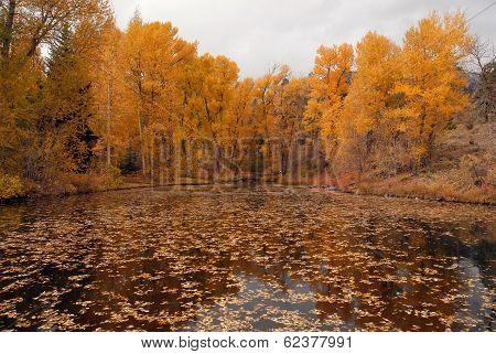 Autumn Foliage: Aspen Trees reflecting in lake