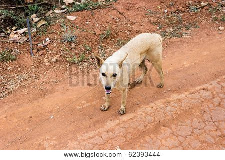 street dog staring with its mouth open poster