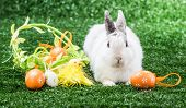 white rabbit on a green lawn with a basket of Easter eggs poster