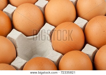 Missing Chicken Egg