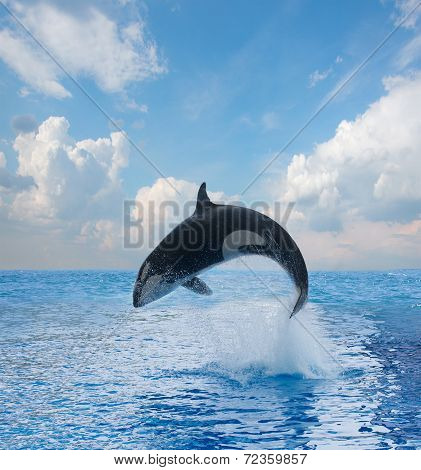 jumping killer whale, seascape with  ocean  waters and cloudscape poster