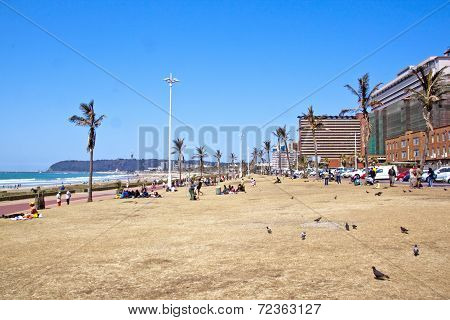 Many People And Pigeons On Grass Verge On Beachfront