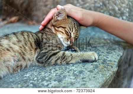 Person is petting a cat