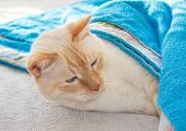 cozy waking cat covered blue terry blanket poster