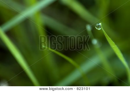 Waterdrop On Foliage In The Morning