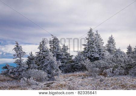 Roan Mountain Winter Hike 5
