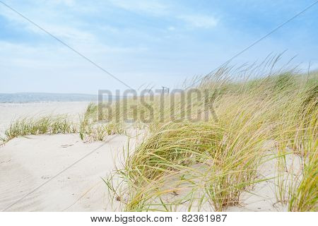 Windswept beach, typical Cape Cod coastal environment.