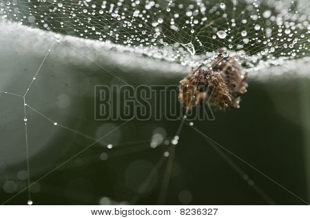 Spider web with dew drops in back light poster