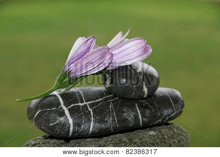 flowers and rocks in nature