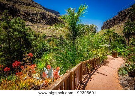 Tropical plants garden