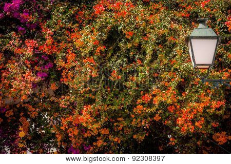 Streetlamp and colorful flowers