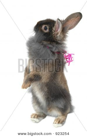 Lion Rabbit Gift 2