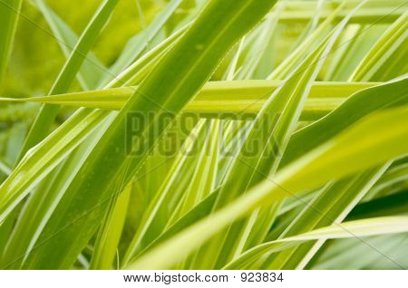 water plants green color leaves north flora poster