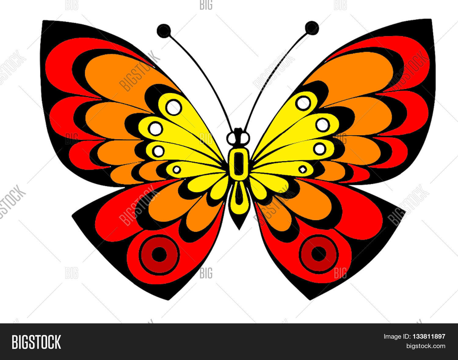 Beautiful Butterfly Colorful Creative Yellow Red Orange On