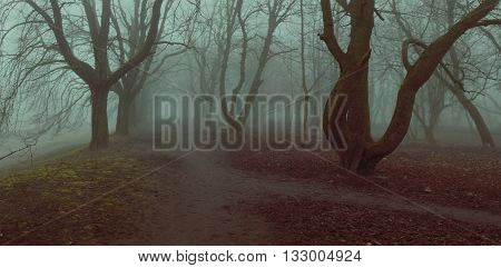 fog background mistycal park alley autumn trees fall foliage shallow depth of field stylized filter