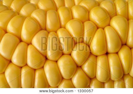 corn cob texture background macro closeup studio shot poster