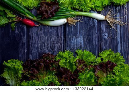 Spring Onions Radish And Salad