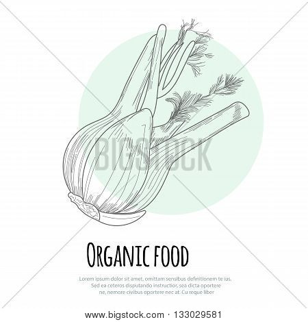 Hand drawn fennel over white background. Vector