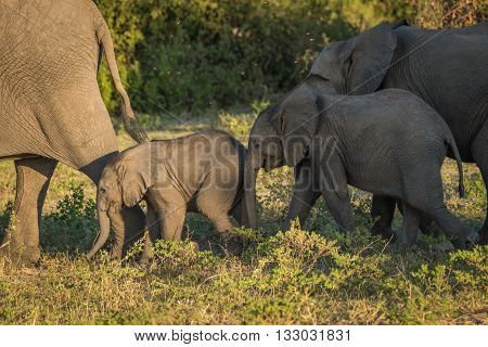 Two Baby Elephants In Sunshine And Shade