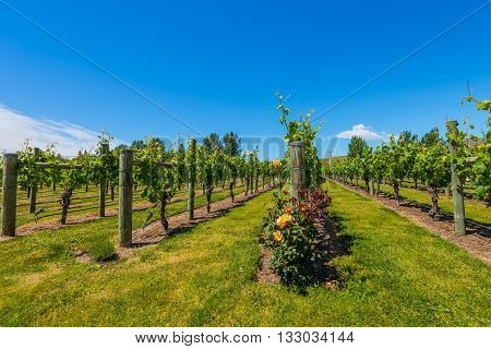 New Zealand's wine country is located in Napier near Hawke's Bay