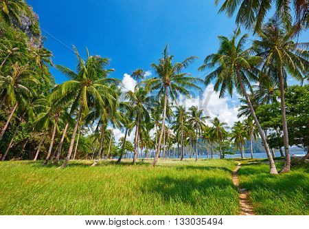 Tropical island with palm trees. Philippines