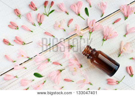 Apothecary bottle of herbal tincture essential oil, pink flowers scattered, top view.