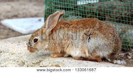 Picture of a bunny rabbit near cage