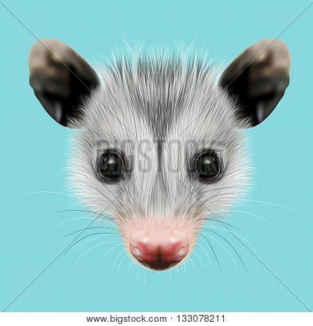 Illustrated Portrait of Opossum. Cute fluffy face of Opossum on blue background.