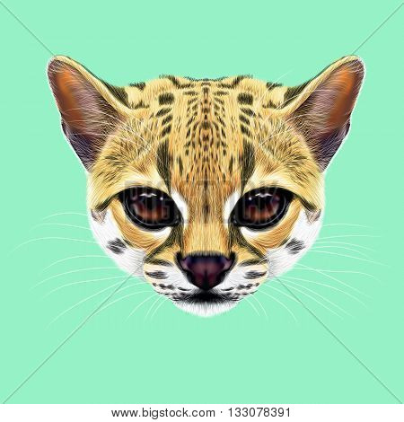 Illustrated Portrait of Margay cat. Cute face of wild cat on blue background.