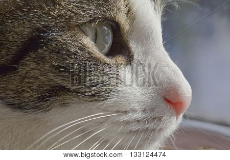 Concentrated Focused Domestic Cat Lurking