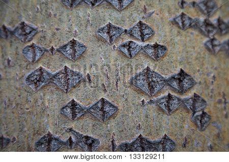 Aspen bark texture. Aspen bark background. Aspen bark texture. Tree bark background. Bark texture. Tree bark texture. Bark background.