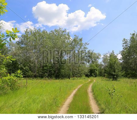 Summer landscape with rut road across meadow in forest