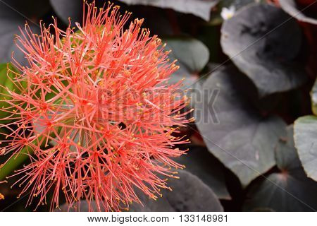 A beautiful orange flower blooming in the wild