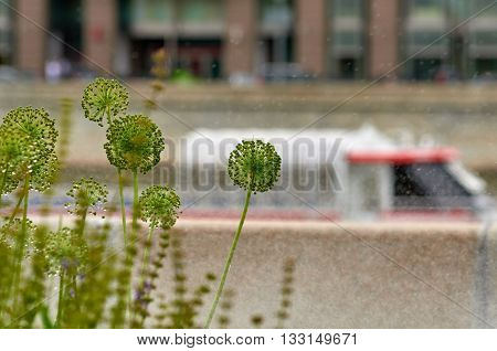 Focus on the green flowers. a moving boat on the river is blurred. Moscow Russia.